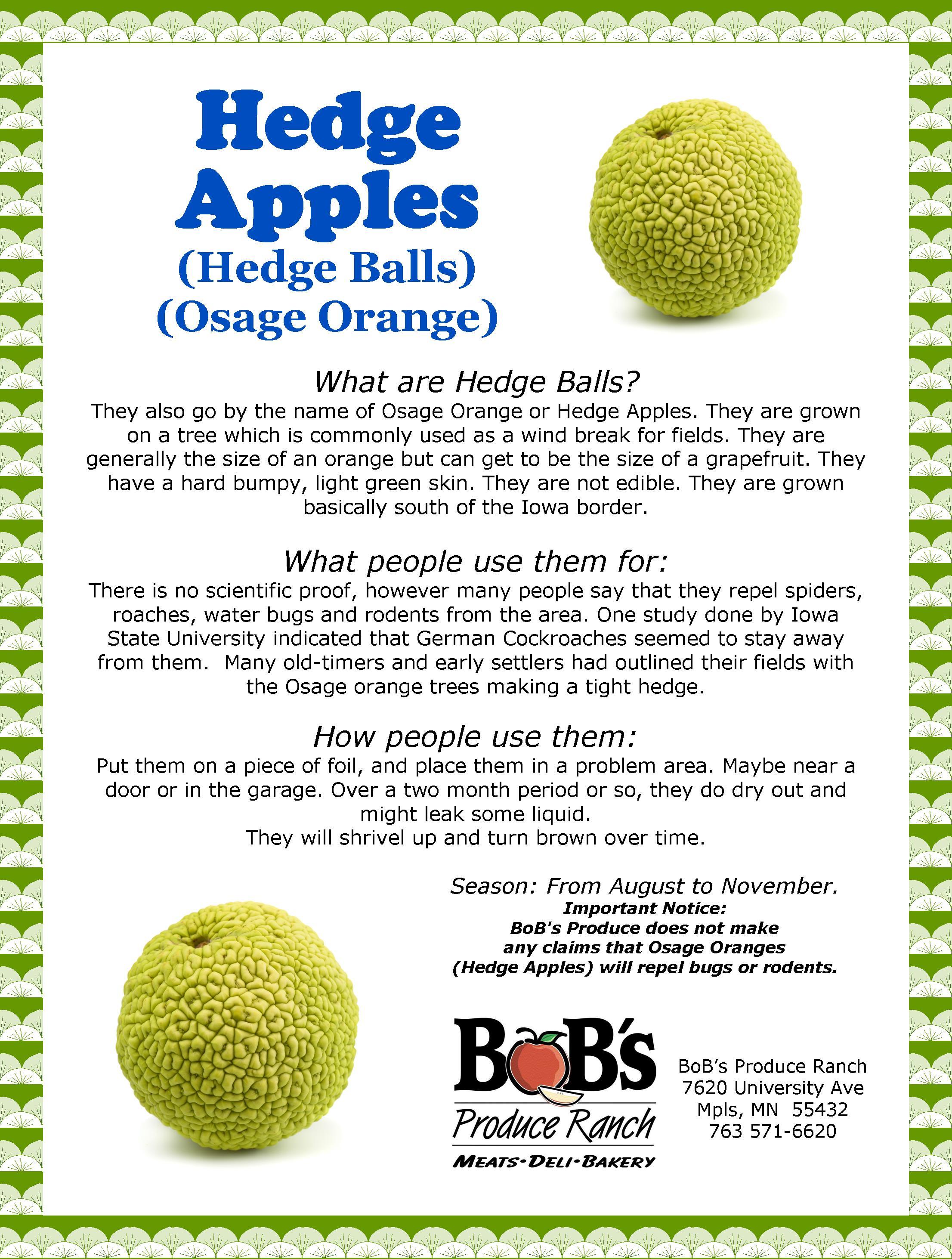 Hedge Apples.jpg