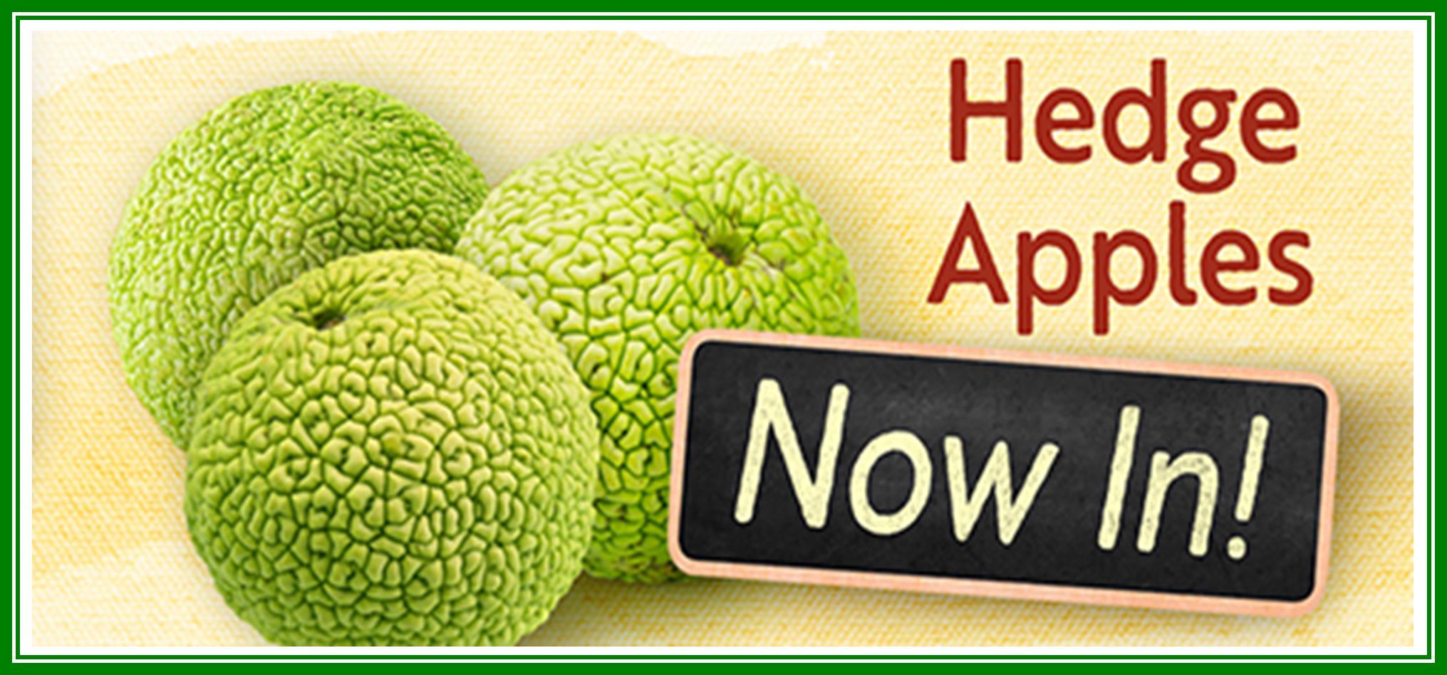 Hedge Apples Now In.jpg